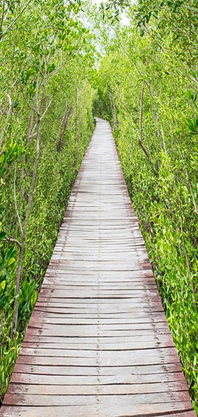 Fotomurale per porta - The Path of Nature