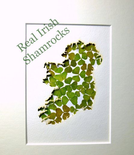 Crafted Gift From Real Irish Shamrocks In Ireland Map