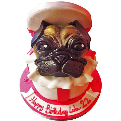 Pug In a Box Cake - Last minute cakes delivered tomorrow!