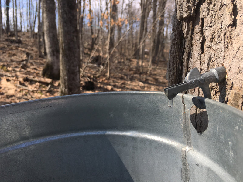 Maple Sugaring Season - Being Prepared