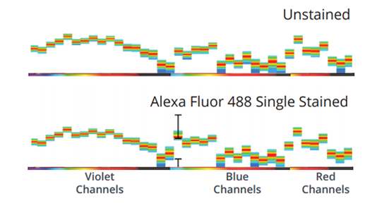 Spectrum plots of unstained and Alexa Fluor 488 stained cells acquired from Northern Lights.