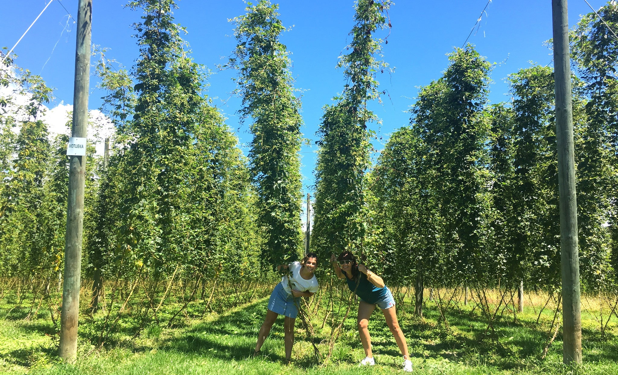 Hops farm for natural skincare