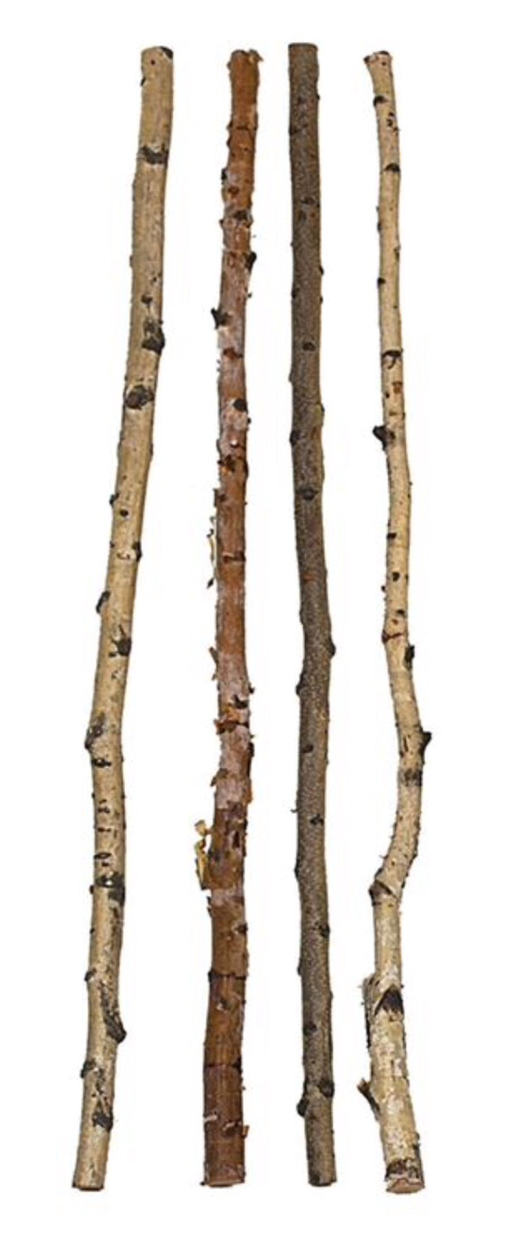 59' Wood Birch Branch