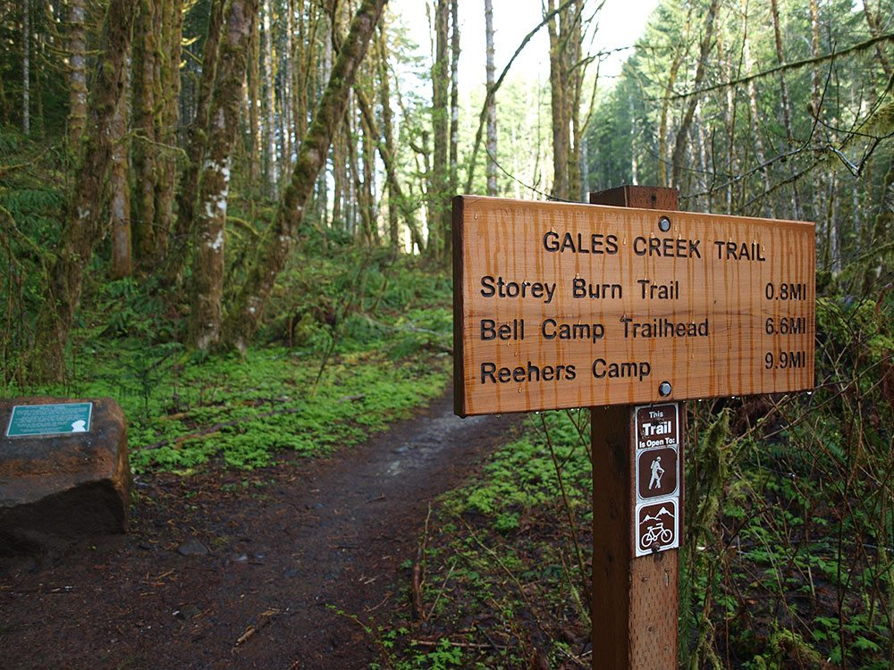 Gales Creek Campground Trailhead Timber Oregon