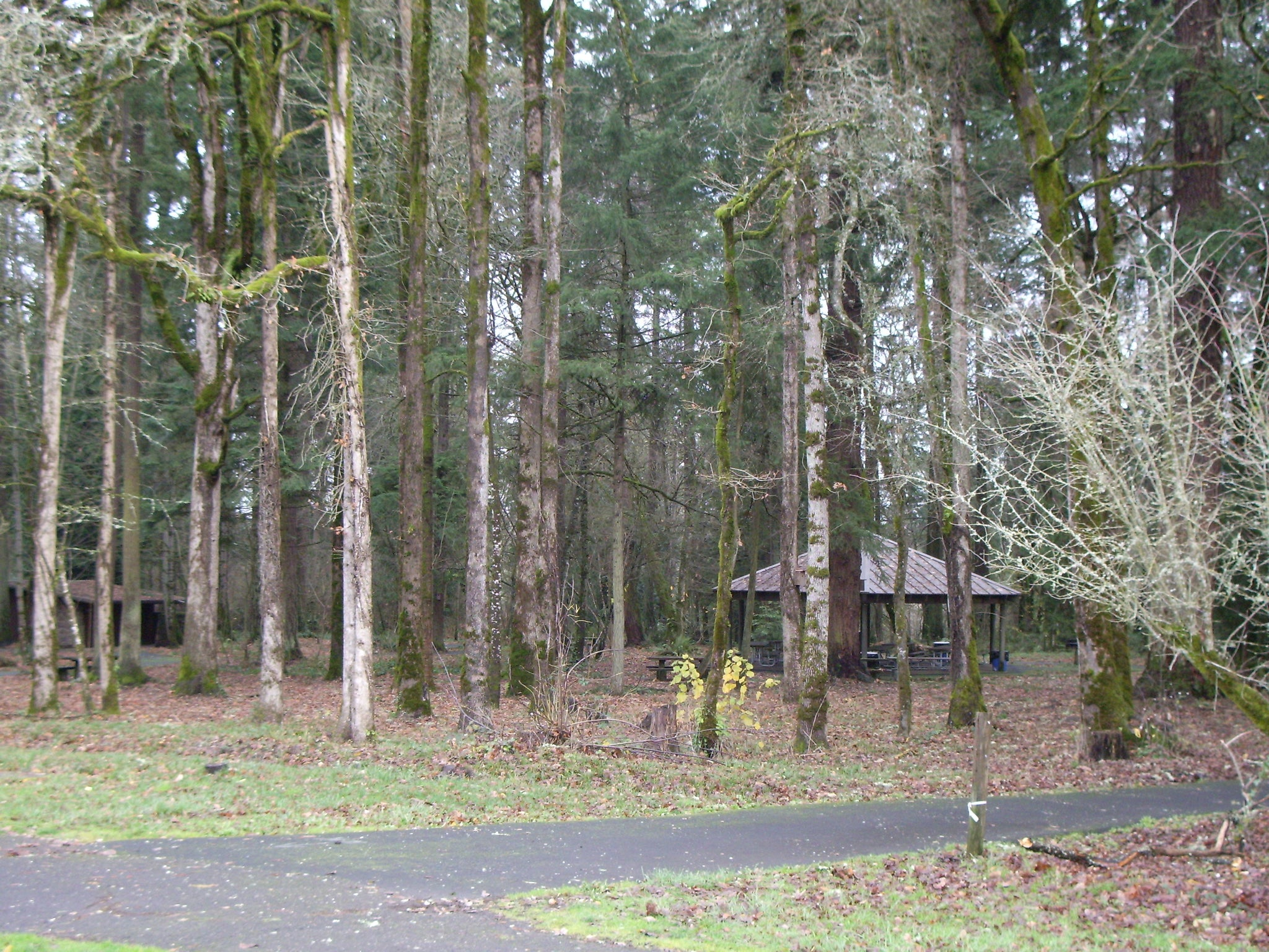 Mary S Young picnic area state park west linn oregon