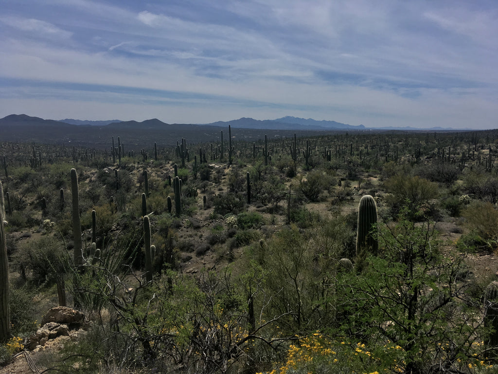 Arizona Trail thru hike