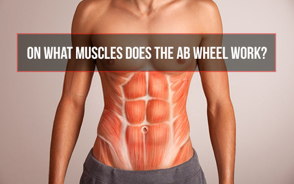 ab roller muscles worked, what muscles does the ab wheel work