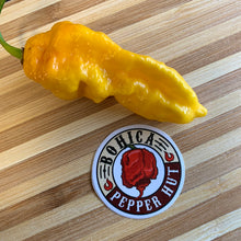 Bhut Jolokia Assam Yellow - Seeds