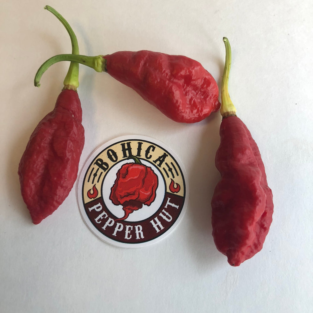 Jay's Peach Primo Red Cross - Seeds - Bohica Pepper Hut