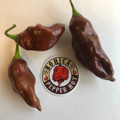 Habanero Black - Seeds - Bohica Pepper Hut