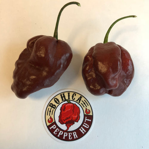 Habanero Chocolate - Seeds - Bohica Pepper Hut