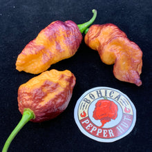 Pink Tiger x Peach Bhut - Seeds - Bohica Pepper Hut
