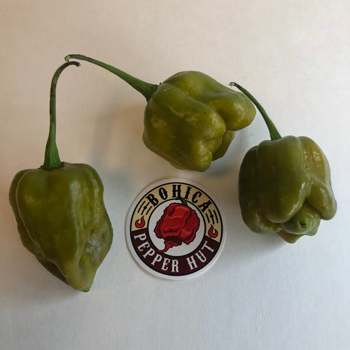 Trinidad Mustard Scorpion - Seeds - Bohica Pepper Hut