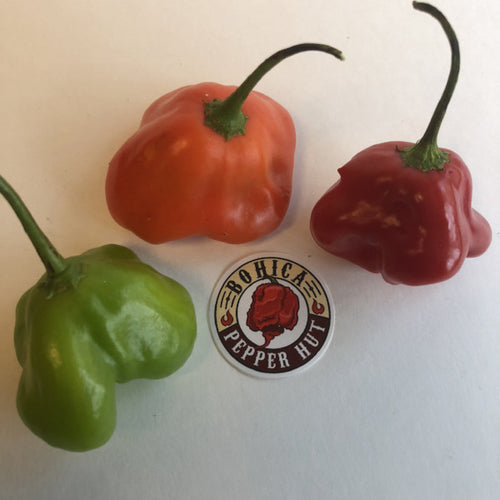 Bishops Crown - Seeds - Bohica Pepper Hut