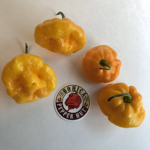 Foodarama Scotch Bonnet Yellow  - Seeds - Bohica Pepper Hut