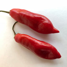 Aji Sugar Rush Red - Seeds - Bohica Pepper Hut