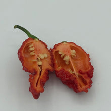 Redgum TigerMAMP x Chocolate Nagabrains - Seeds - Bohica Pepper Hut