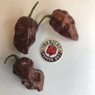 7 Pot Chocolate Brain Strain - Seeds - Bohica Pepper Hut
