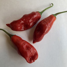 Aji - Pepper Seeds Combo Pack (7 Varieties) - Seeds - Bohica Pepper Hut