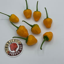 Yellow Hinkelhatz Pepper - Seeds - Bohica Pepper Hut