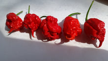 Fresh Carolina Reaper Peppers - Subscription Box (Pre-Order) - Bohica Pepper Hut
