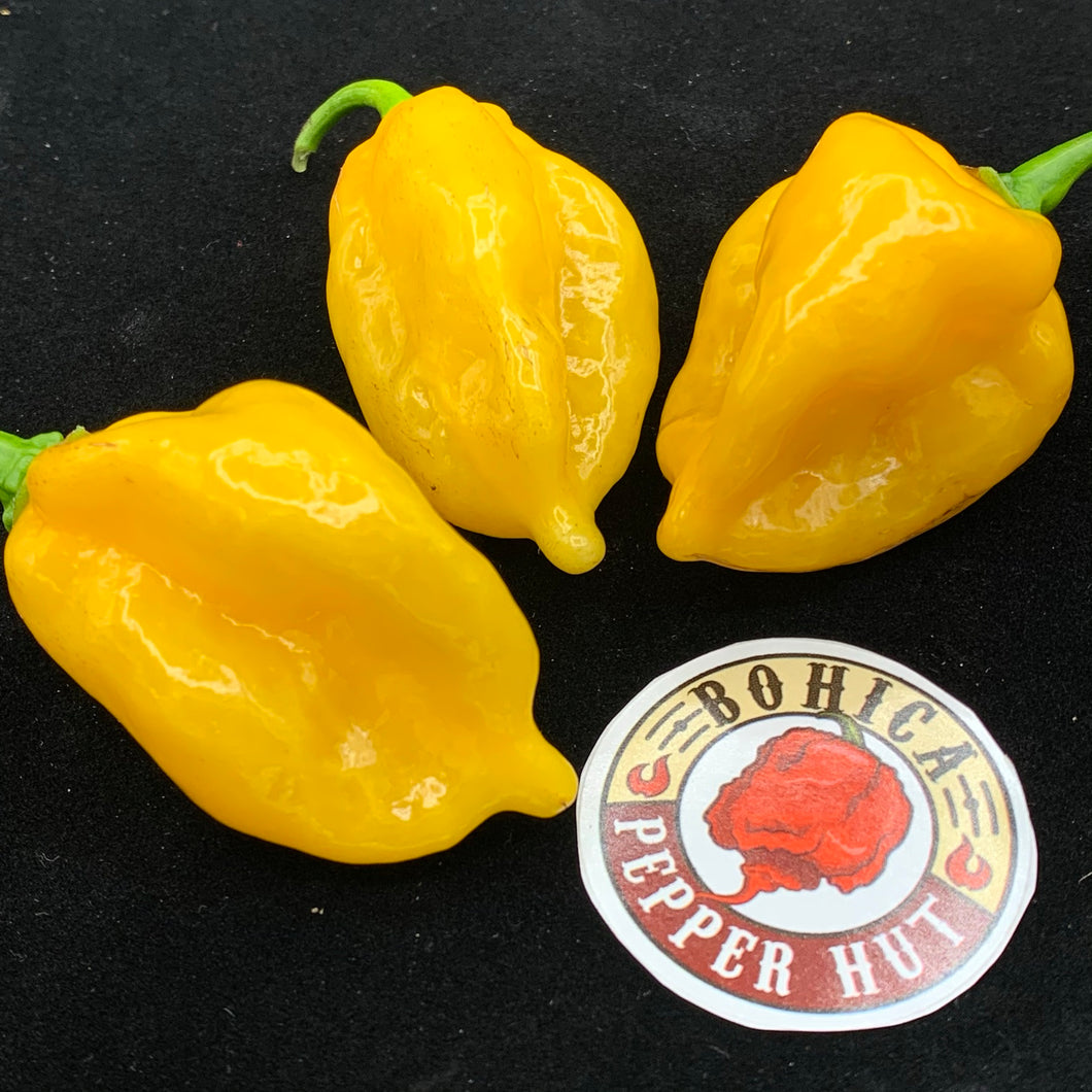 Fatalii x Red Savina - Seeds - Bohica Pepper Hut