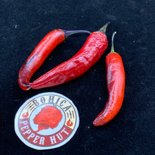 Purple Tiger x Jalapeno - Seeds - Bohica Pepper Hut