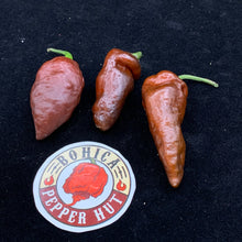 Blue Ghost Chocolate - Seeds - Bohica Pepper Hut