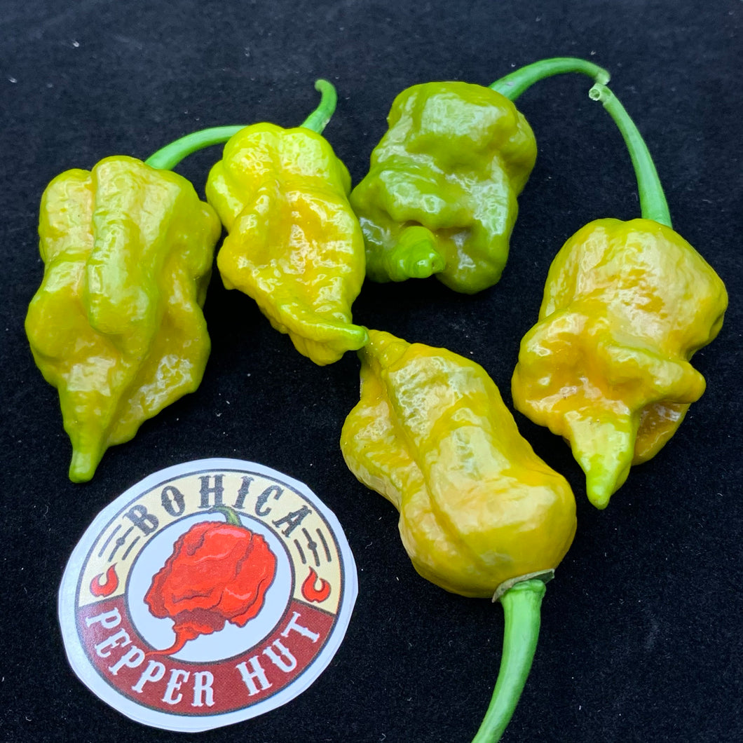 7 Pot Slimer - Seeds - Bohica Pepper Hut