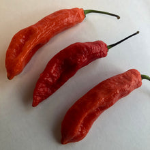 Jalapeno Ghostly - Seeds - Bohica Pepper Hut