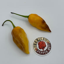 Pimenta Black Bhut - Seeds - Bohica Pepper Hut