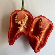 7 Pot Katie - Seeds - Bohica Pepper Hut