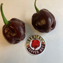 Black Stinger - Seeds - Bohica Pepper Hut
