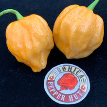 MRM x 7 Pot Brown Peachy - Seeds - Bohica Pepper Hut