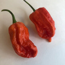 7 Pot Barrackpore - Seeds - Bohica Pepper Hut