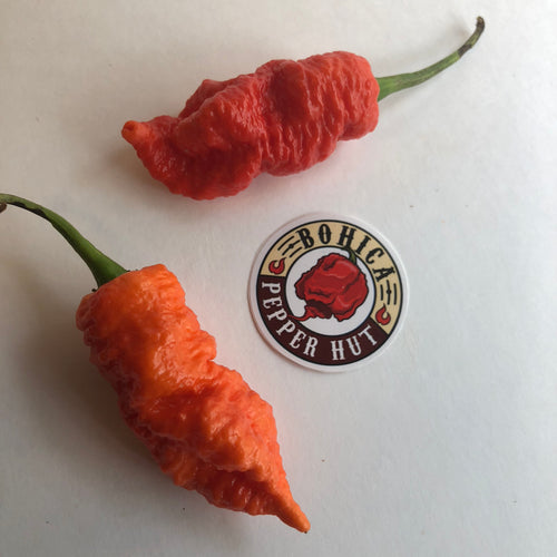 Death Spiral - Seeds - Bohica Pepper Hut