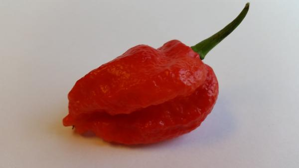 Best Sellers - Super Hot Pepper Seed Combo Pack (13 Varieties) - Seeds - Bohica Pepper Hut