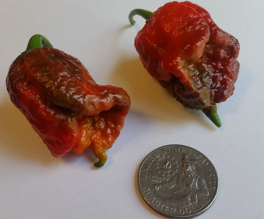 7 Pot Lava Red Cross - Seeds - Bohica Pepper Hut