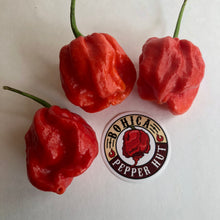 Wicked Ass Little 7 Pot (W.A.L.7) - Seeds - Bohica Pepper Hut