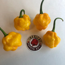 MOA Scotch Bonnet - Seeds - Bohica Pepper Hut
