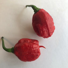 Dragon's Breath - Seeds - Bohica Pepper Hut