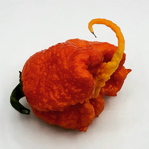 Carolina Reaper - Seeds - Bohica Pepper Hut