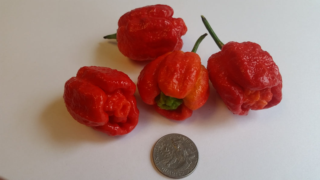 BORG 9 - Seeds - Bohica Pepper Hut
