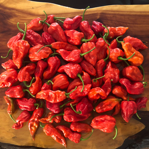 Fresh Super Hot Peppers - Mixed Red/Orange Box:    All Red & Orange colored peppers - Bohica Pepper Hut