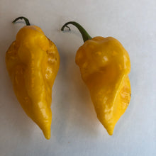 Fresh Super Hot Peppers - Mixed Yellow Box: All Yellow Colored Peppers - Bohica Pepper Hut