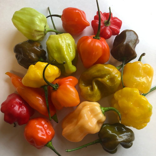 Fresh Habanero Peppers - Mixed Box: Red, Orange, Chocolate, Peach, etc - Bohica Pepper Hut