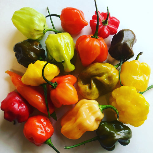 Habanero / Scotch Bonnet  - Pepper Seeds Combo Pack (10 Varieties) - Seeds - Bohica Pepper Hut