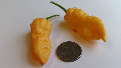 Peach Bhut Jolokia Ghost - Seeds