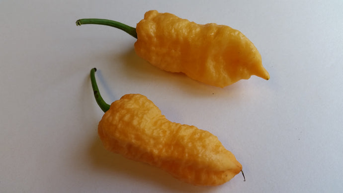 Peach Bhut Jolokia Ghost - Seeds - Bohica Pepper Hut