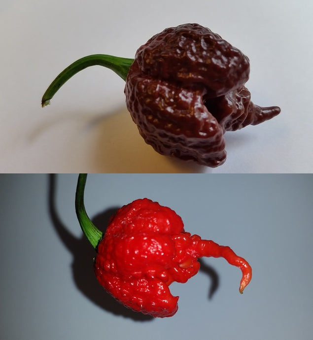 Reaper Combo Pack - Seeds - Bohica Pepper Hut